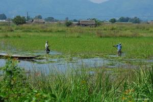 Agricultores en el Lago Inle