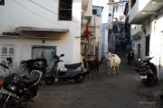 Calles Udaipur
