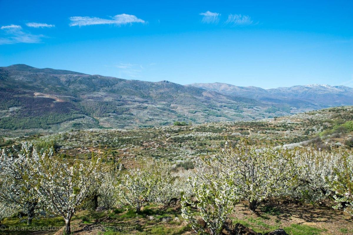 Comarca de la Vera y Valle del Jerte. Roadtrip en moto entre cerezos.