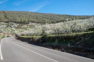 Carretera CCV-173 (Cáceres)