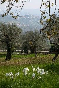 Vistas de los olivos desde Boville Ernica